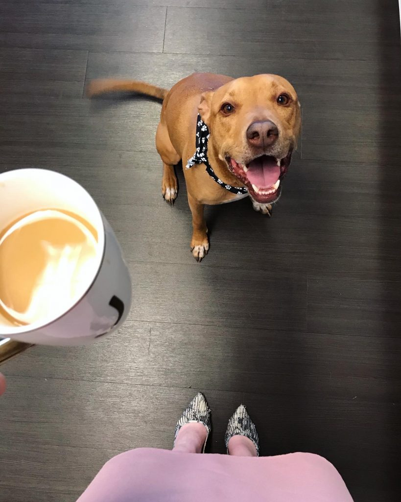 Caesar, dog, Engel & Völkers Nashville