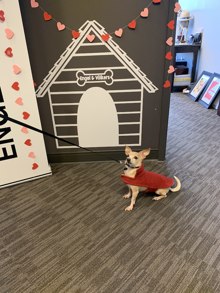 Dudley, dog, Engel & Völkers Nashville